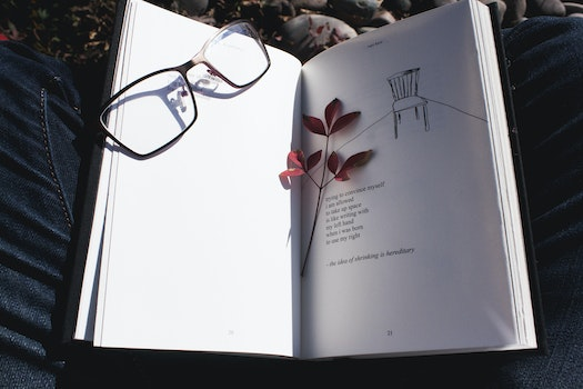 Free stock photo of nature, outside, glasses, outdoors