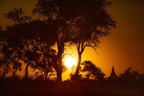 Foto d'estoc gratuïta de posta de sol africana