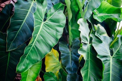 Gratis lagerfoto af 4k-baggrund, blade, Botanisk, close-up