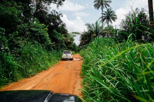 Foto profissional grátis de aconselhamento, árvores, aventura, campo