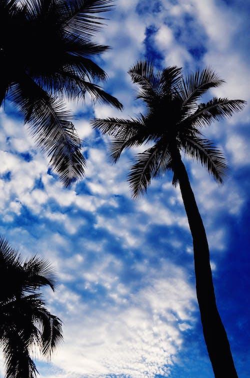 Ilmainen kuvapankkikuva tunnisteilla hiekkaranta, kaunis taivas, palmu, palmupuut