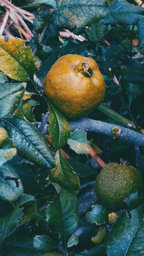 ağaçlar, güz, hasat, meyve içeren Ücretsiz stok fotoğraf