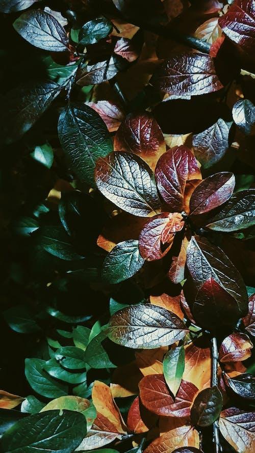 ağaçlar, bitki örtüsü, güz yaprakları, karanlık içeren Ücretsiz stok fotoğraf