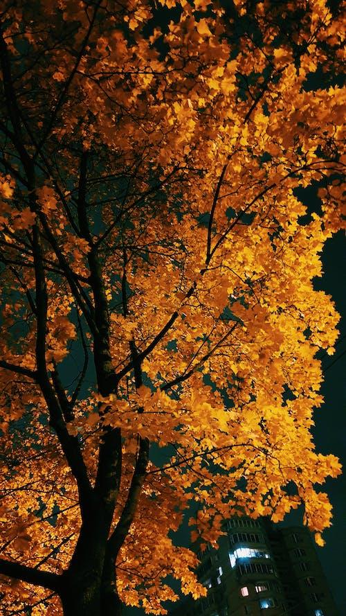 ağaçlar, altın sonbahar, altın yapraklar, doğa içeren Ücretsiz stok fotoğraf