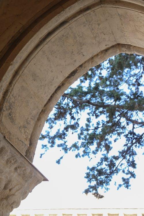 Fotos de stock gratuitas de afuera, árbol, arco, arquitectónico