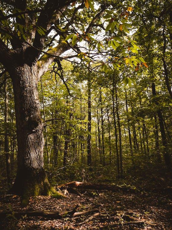 fa, faágak, fák