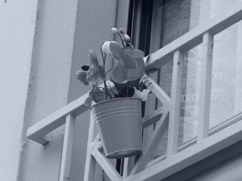 Gratis arkivbilde med balcon, dekorasjon, fleurs, grill