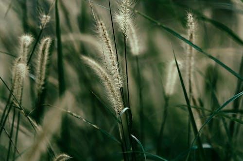 Fotobanka sbezplatnými fotkami na tému hĺbka ostrosti, rastlina, tráva