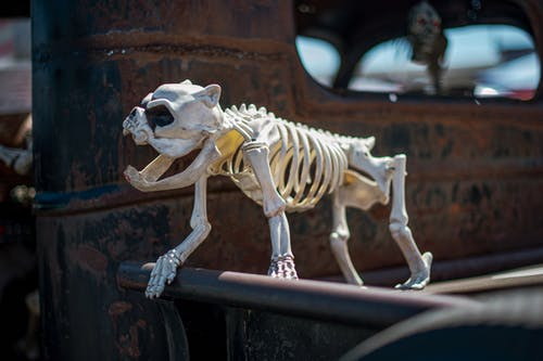 Foto stok gratis anjing, anjing penjaga, berkarat, chevrolet