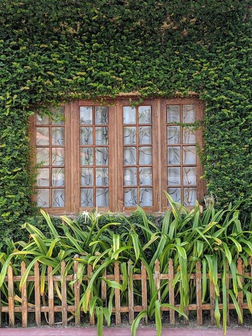 Free stock photo of garden, glass window, window view
