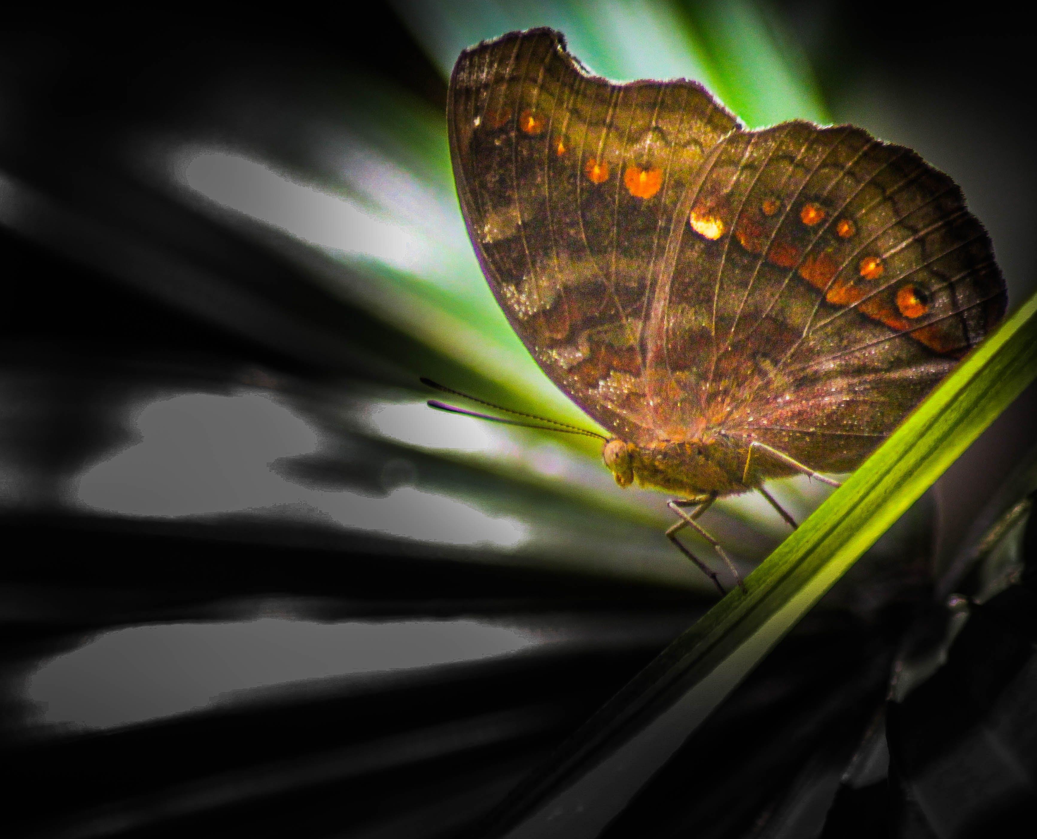 Free stock photo of beauty, butterflies, butterfly