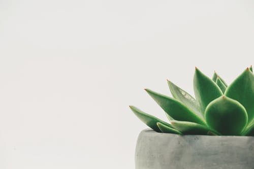 Succulent Plant on Gray Plant Pot Close-up Photo