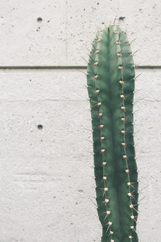 Free stock photo of earth, plant, green, cactus
