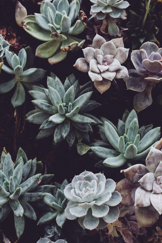 botanical, cactuses, close-up