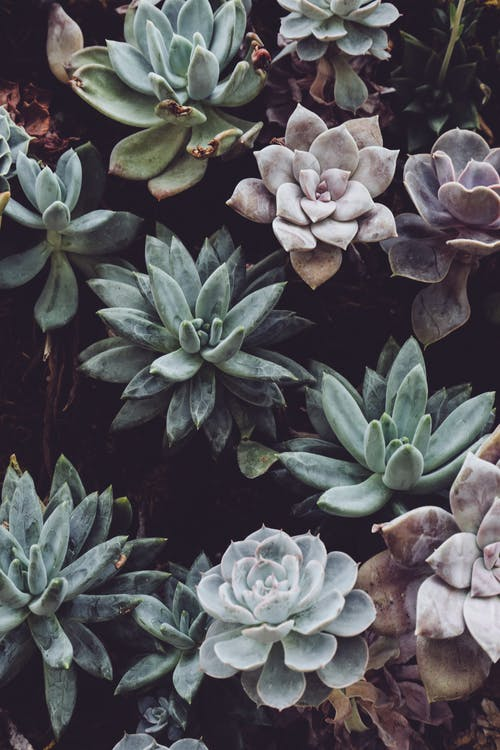 Selective Focus Photography of Green Succulents