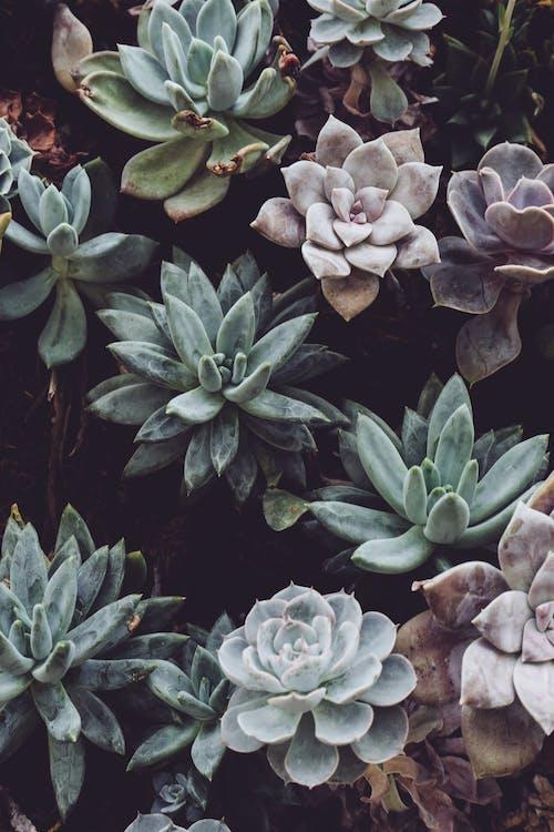 barvy, botanický, kaktusy