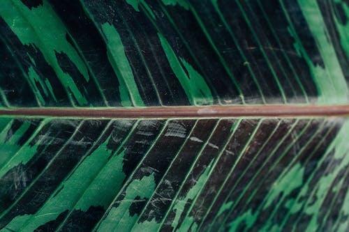 Free stock photo of botanical, camo, camoflauge