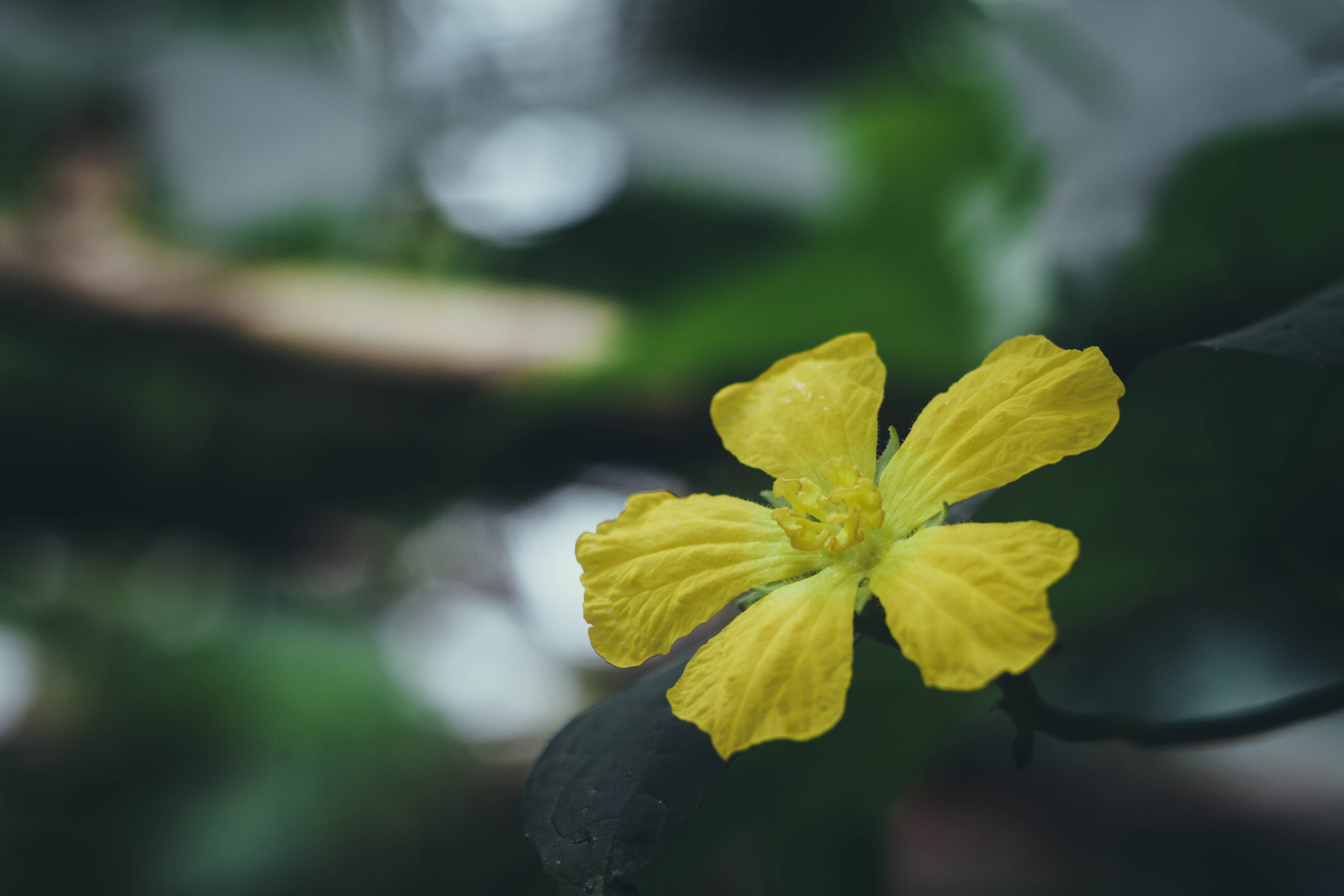 flower, sun, tree