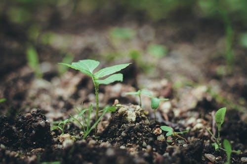 Gratis lagerfoto af grøn, jord, lille, soid