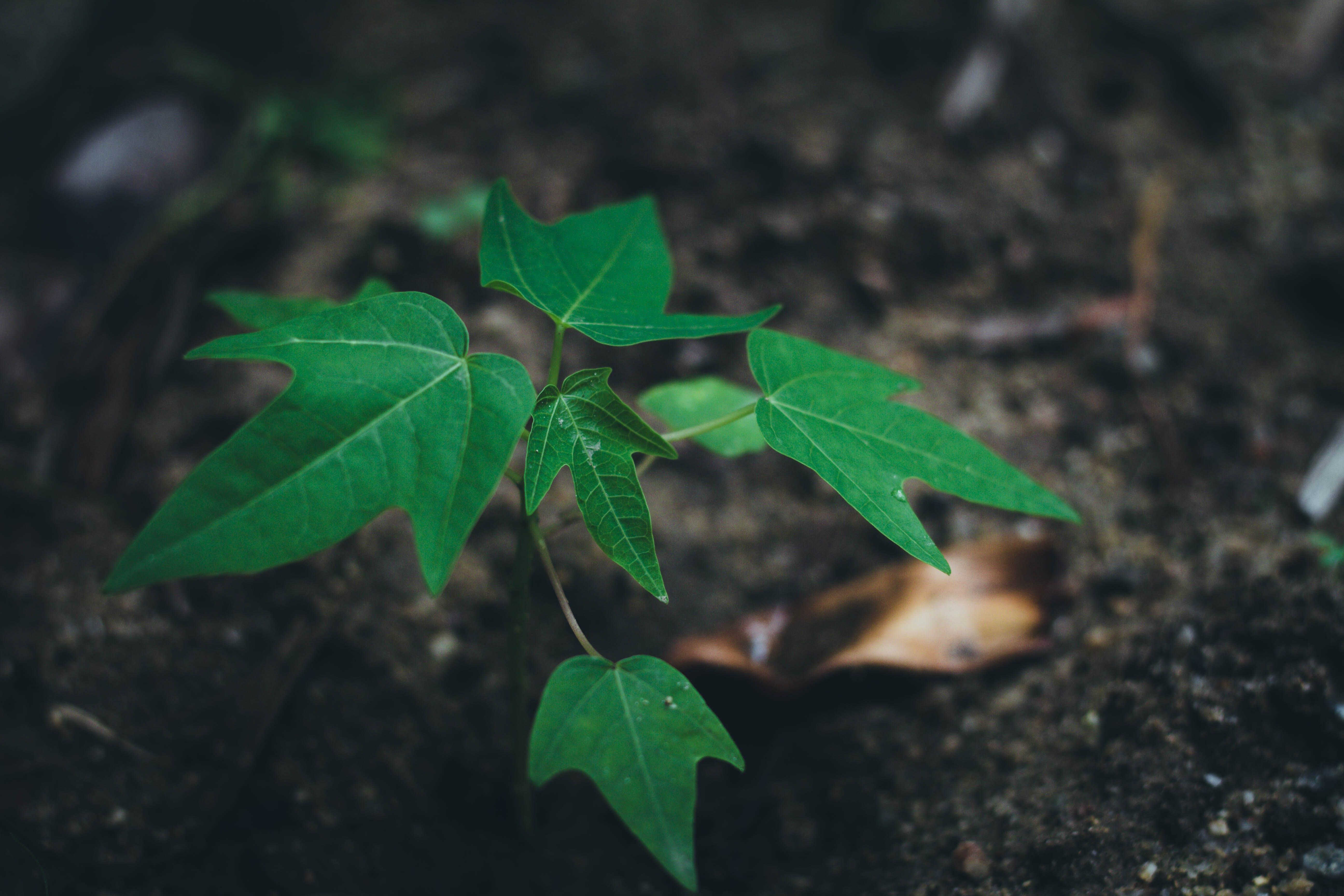 green, soid, tree