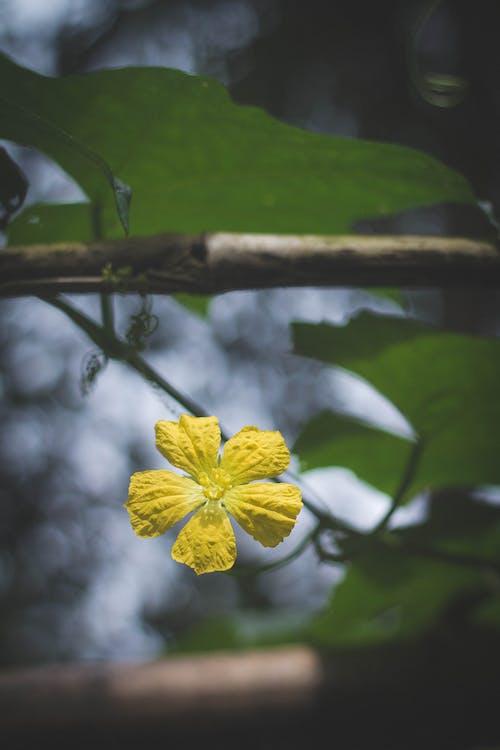 Gratis lagerfoto af blomst, natur, sol, vietnam