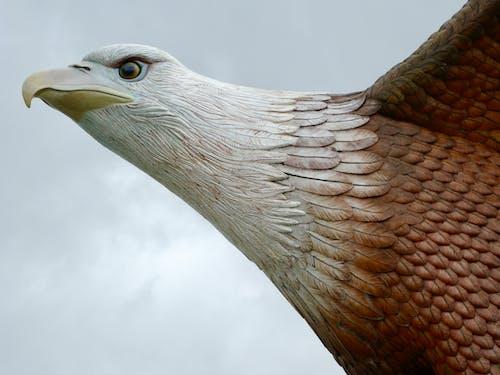 Δωρεάν στοκ φωτογραφιών με αετός, αετός τετράγωνο