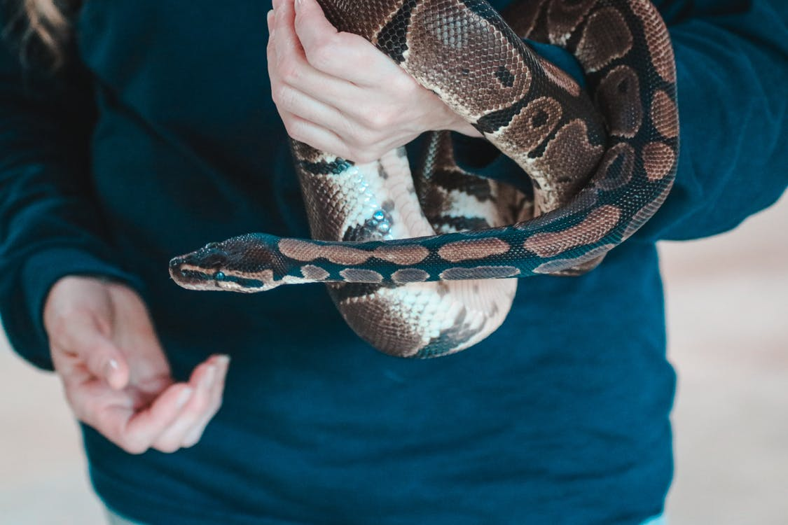 Person Holding Snake