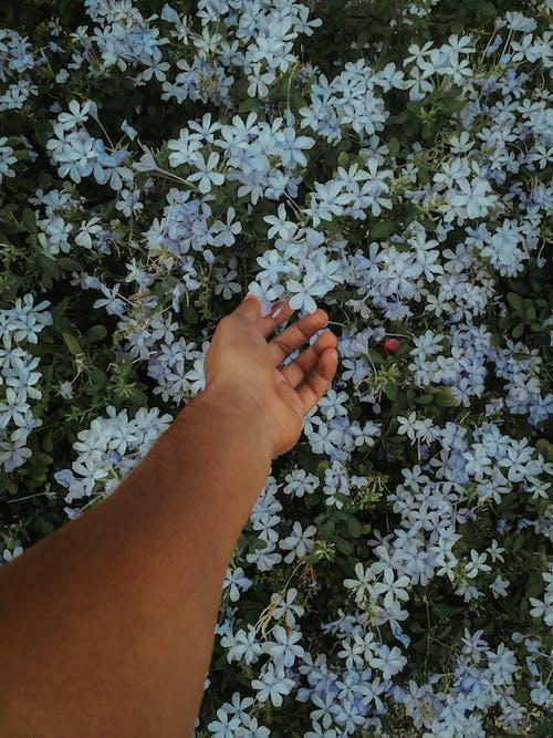 Gratis arkivbilde med blå blomst, blå blomster, blomsterbukett, natur