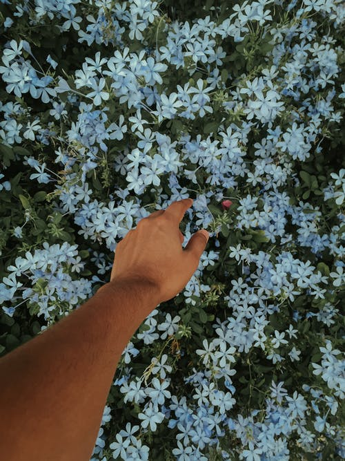 Photo Of Person Reaching Flowers