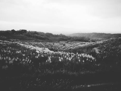 คลังภาพถ่ายฟรี ของ กลางแจ้ง, การถ่ายภาพขาวดำ, ข้างนอก, ขาวดำ
