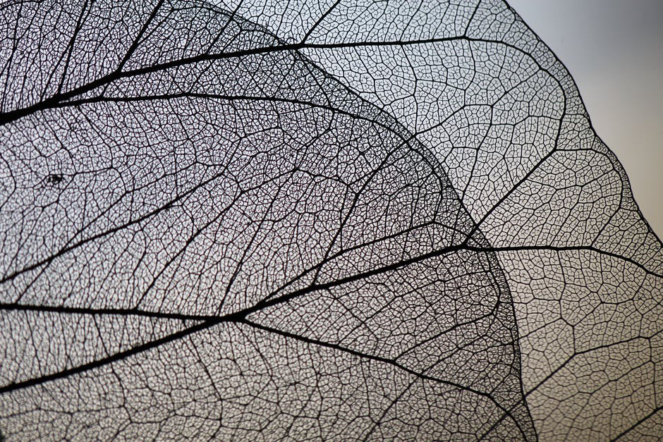 Close up view of a leaf