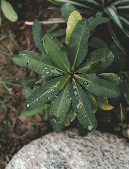 Photos gratuites de après la pluie, beauté dans la nature, centrale, goutte