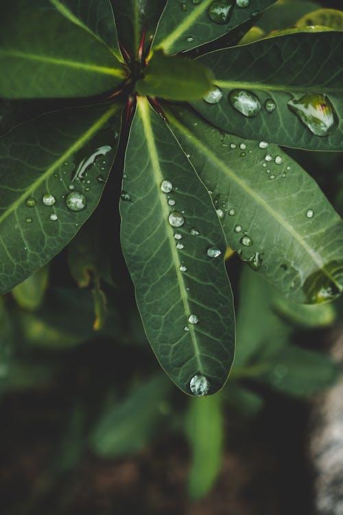 Photos gratuites de centrale, feuille, feuilles, fleur