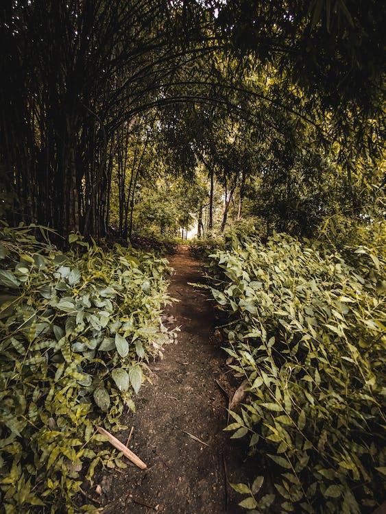 arbori, cale, cărare