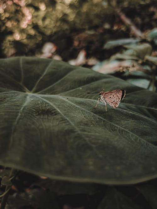 Selective Focus Photo of Moth on Green Leaf
