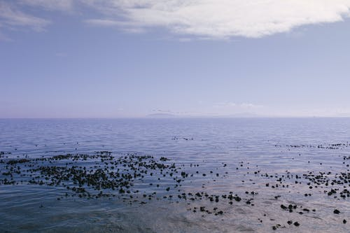 Photo of Ocean Scenery