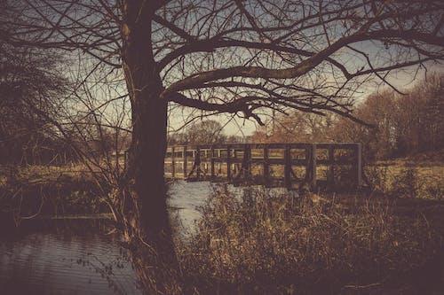 Kostenloses Stock Foto zu bäume, bogenbrücke, brücke, flussufer