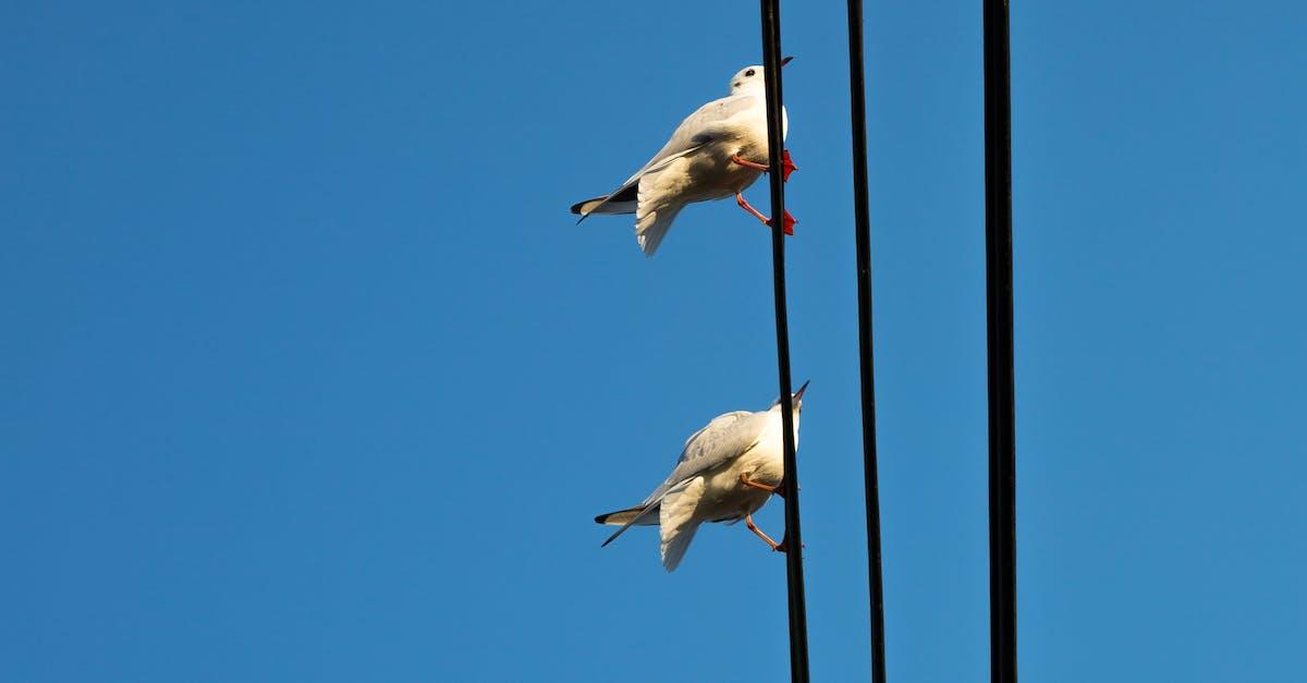 Kostenloses Foto zum Thema: aufgereiht, blaue himmel, möwen