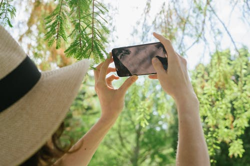 Photo Of Person Taking Picture Of Leaves