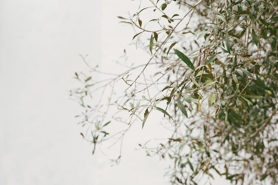 al aire libre, árbol, Arte