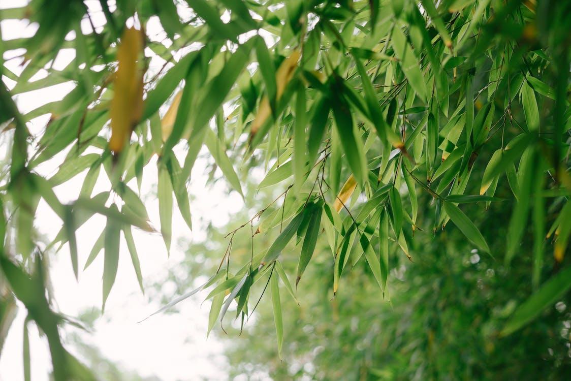 бамбук, великий план, відділення