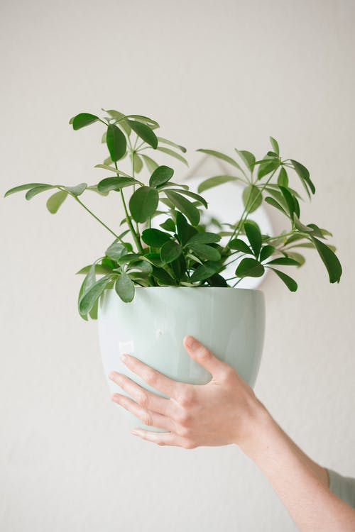 Photo Of Person Holding Plant