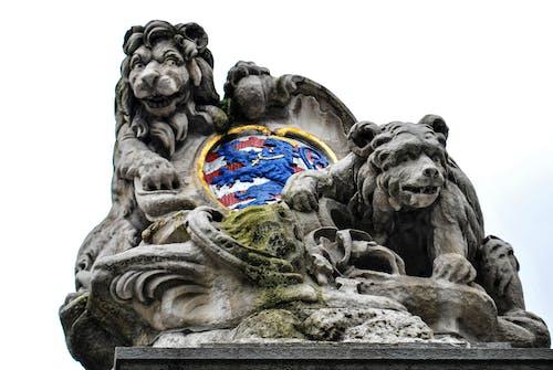 Gratis arkivbilde med Belgia, bjørner, brugges, escudo