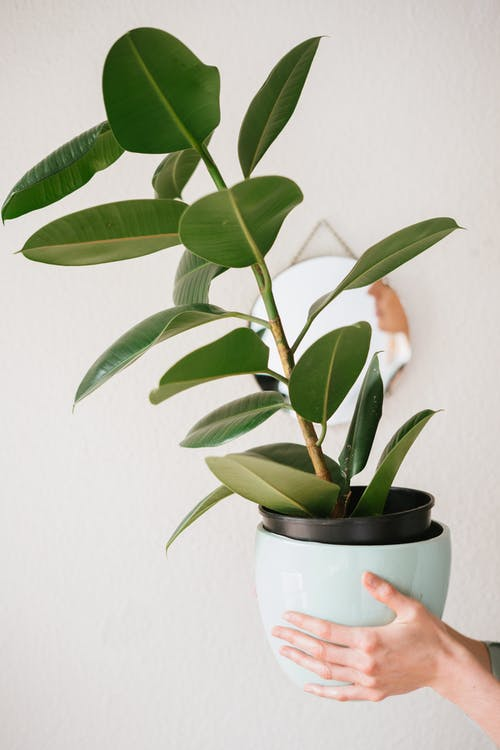 Photo Of Person Holding Plant Pot