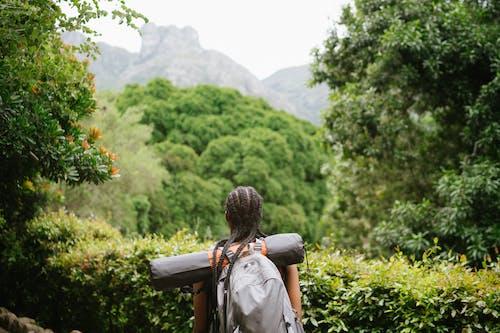 Imagine de stoc gratuită din arbori, aventură, călător, călătorește