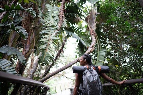 Imagine de stoc gratuită din arbori, aventură, balustradă, călătorește