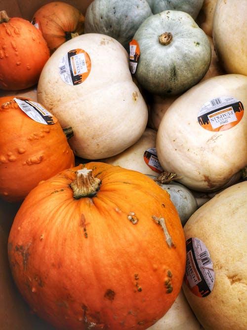 Immagine gratuita di agricoltura, cibo, comprimere, delizioso