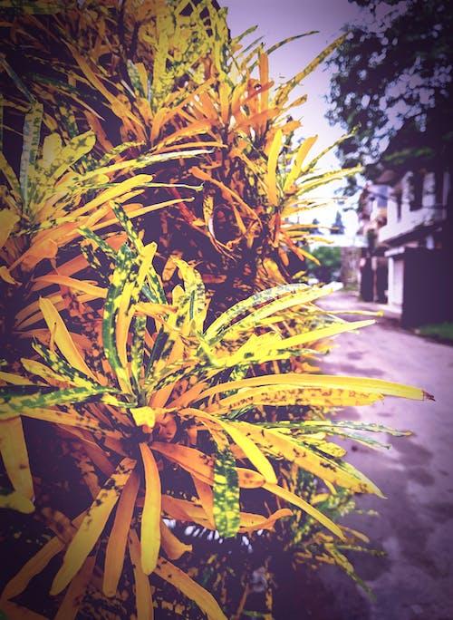 Gratis lagerfoto af efterårsblade, løvfald