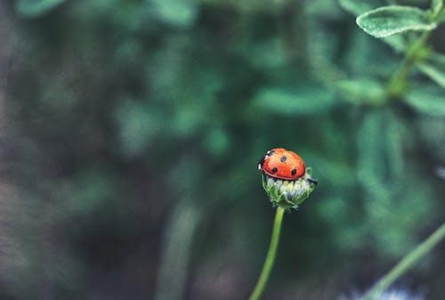 Foto d'estoc gratuïta de desenfocament, flor, fons desenfocat, fotografia de natura