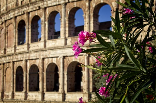 Free stock photo of #colosseum #rome #flowers #italy